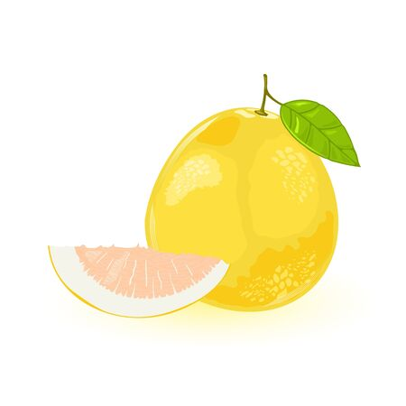 Pomelo or shaddock whole with green leaf and segment of it. Yellow sweet largest citrus fruit with pink flesh and very thick albedo, rind. Vector illustration isolated on white background.