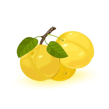 Three ripe yellow myrobalan or cherry plums are on brunch with green leaves. Edible juicy fruit with sweet and sour taste. Vector illustration isolated on white background for packing design.