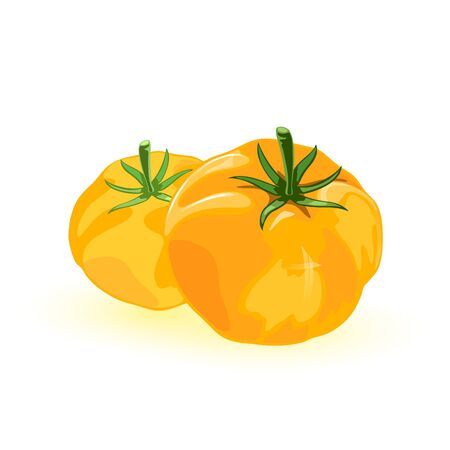 Two fresh yellow tomato with umami flavor. Ripe juicy vegetables are source of minerals, vitamins, dietary fiber. Summer harvest, tasty snack. Vector illustration isolated on white background. 일러스트