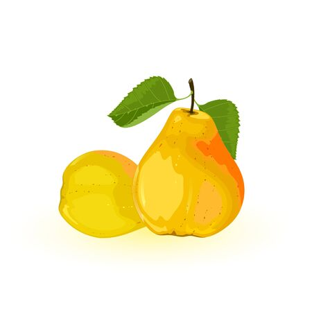 Two ripe yellow pears with green leaves. Summer sweet juicy snack. Delicious fruit. Ingredient using for vegan, vegetarian dishes. Vector illustration isolated on white background. Stock Illustratie