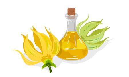 Yellow flowers of Cananda Odorata or Ylang Ylang are near glass corked jar with gold fragrant essential oil. Ingredient used in aromatherapy, perfumery, like aphrodisiac. Vector on white.
