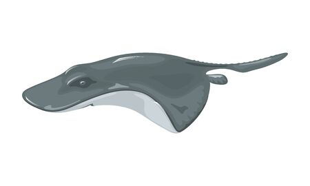 Crampfish or Atlantic torpedo is a species of electric ray fish having dark color, almost circular pectoral fin disk and robust tail with large triangular caudal fin. Vector isolated on white.