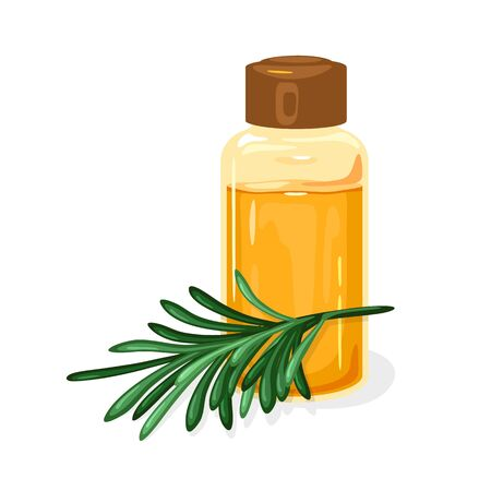 Green twig of Siberian pine or Melaleuca is near glass jar closed by brown cap with fragrant curative essential oil. Natural antiseptic, antibiotic, infection treatment, massage agent. Vector on white