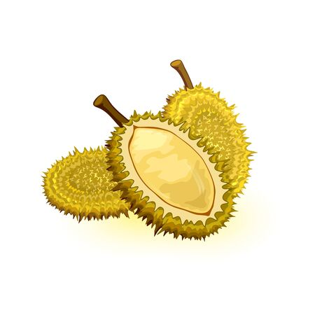 Durian with round shape, greenish-brown husk colour and pale yellow tasty flesh. Edible fruit with large size, strong unpleasant odour and thorn-covered rind. Vector illustration isolated on white. Stock Illustratie
