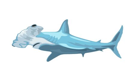 Hammerhead shark has head, which is flattened and laterally extended into hammer shape. Toothed predatory fish. Aquatic creature, beast, monster. Vector illustration isolated on white background. Çizim