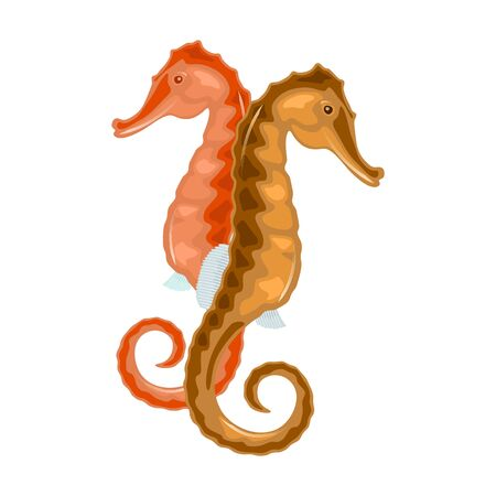 Seahorse has head and neck suggestive of horse, segmented bony armour, upright posture, curled prehensile tail, can camouflage. Vector isolated on white for underwater marine fauna theme design.