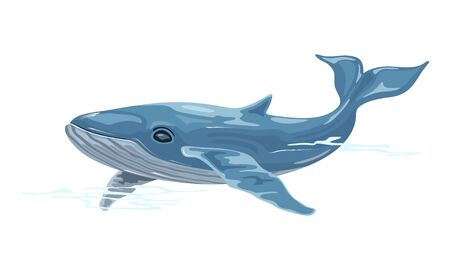 Whale is aquatic placental marine mammal with streamlined fusiform body and two limbs that are modified into flippers, producing vocalizations. Vector illustration isolated on white background. Stock Illustratie