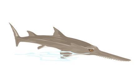 Sawfish or carpenter shark is largest fish with long, narrow, flattened rostrum, or nose extension, lined with sharp transverse teeth, resembling saw. Vector illustration isolated on white.