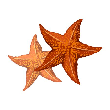 Orange starfishes or sea stars are star-shaped echinoderms, marine invertebrates having central disc and five arms. Vector illustration isolated on white for summer beach, tourism themes design.