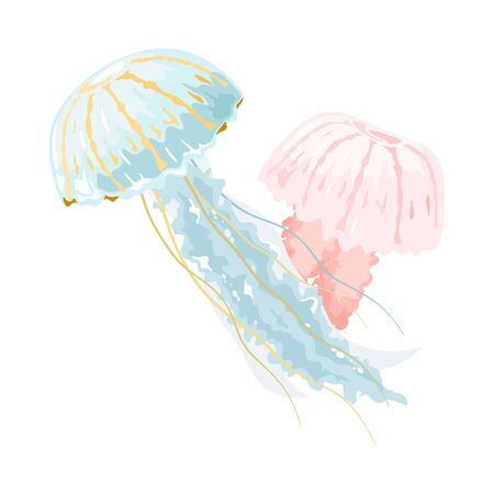 Light blue and pink jellyfishes or medusae are free-swimming marine animals with umbrella-shaped pulsating bells and trailing tentacles. Vector illustration isolated on white for biological projects.