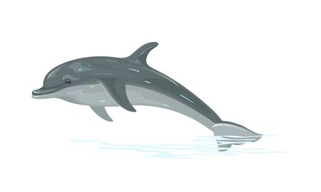 Dolphin is aquatic mammal within infraorder Cetacea. Highly social, intelligent marine animal living in pods. Vector isolated on white for biological, zoological, environment oriented projects. Stock Illustratie