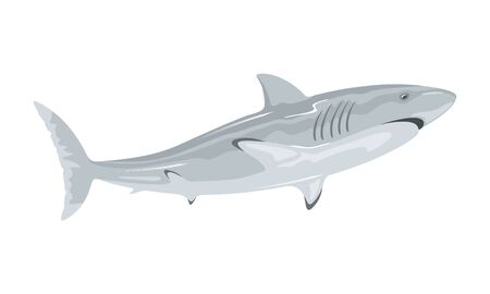 Great white shark is toothed predatory animal having grey dorsal area and robust, large, conical snout. Marine monster. Vector illustration isolated on white for underwater fauna, themes design. Stock Illustratie