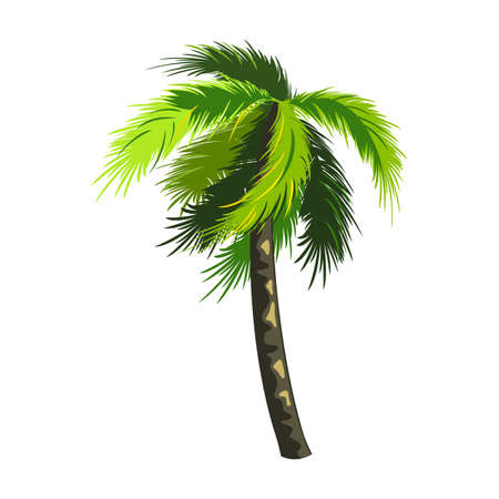 Tropical coconut tree, miami palm, floral and botanical. Vector southern plant, summer rest on exotic island, paradise and oasis for vacation idea isolated on white background