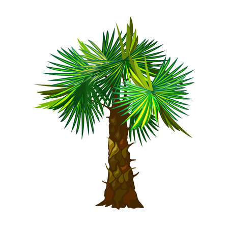 Puffy green palm tree leaves, stem with flakes, desert island plant. Vector fruitful tree, nature, exotic tropical wood, botanical and flora design isolated on white background  イラスト・ベクター素材