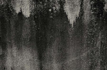 moldy: moldy wall texture