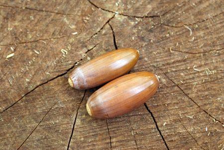 lug: Two acorns on a lug.