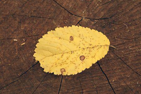 lug: yellow leaf on a lug
