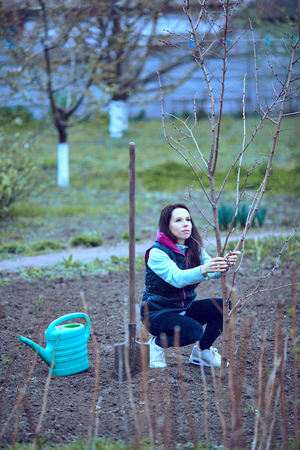 avocation: planting of seedlings by level pair of gardeners with a young fruit tree in the spring