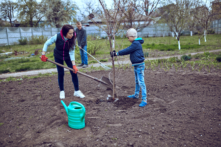 sitting on the ground: planting of seedlings by level pair of gardeners with a young fruit tree in the spring