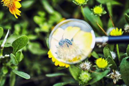 closeup of grass under magnifying glass