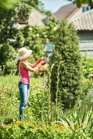 Female gardener working with hedge clippers in garden