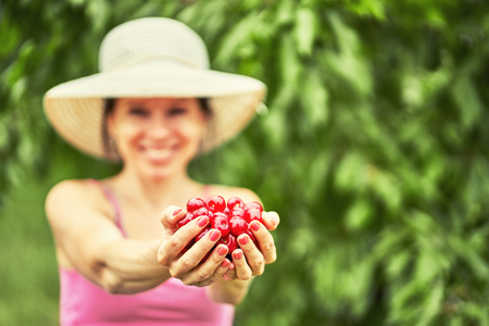 Woman with freshly collected cherries in his hands
