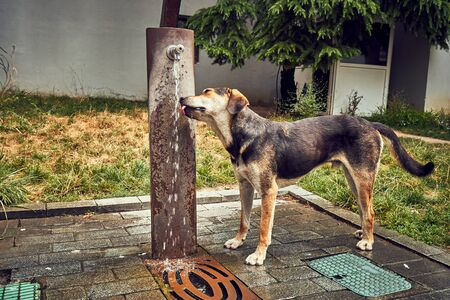 A street dog gets a drink from a water fountain on a hot day. Stok Fotoğraf