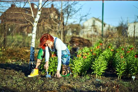 The concept of gardening, planting seedlings on the site in the spring. 스톡 콘텐츠