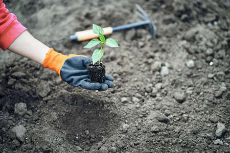 Female Hands Planting Young Plants. Garden concept