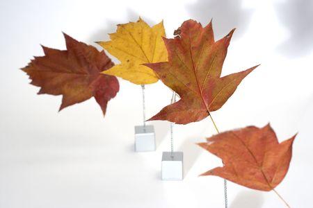 terrena: foglie vicino bianco Archivio Fotografico