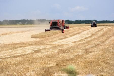 Machine harvesting the wheat field Stock Photo - 6972818