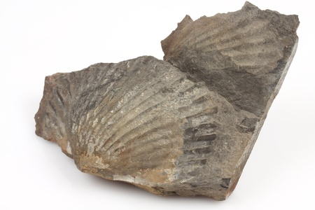 Macro photo of an  fossil over white Imagens