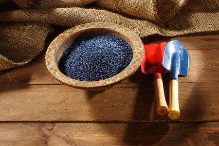 napus: colored rapeseed sowing seed in old bowl Stock Photo