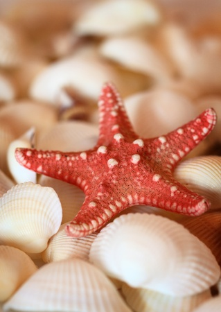red starfish on the background of white shells, shallow DOF photo