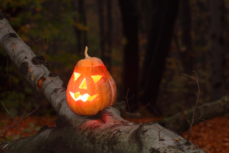 hollows: Pumpkin face for halloween in the dark forest