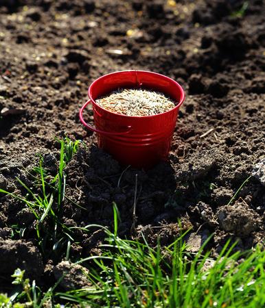 siembra: la siembra de semillas en cubo de metal en el campo, de cerca