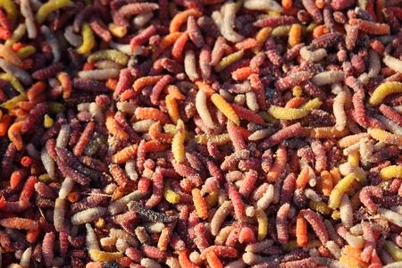 worm infestation: Good fish worm bite using for fishing