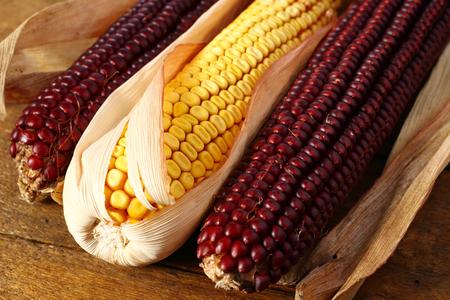 Close up of l indian corn on cob