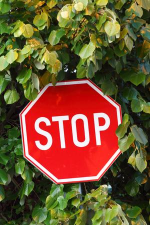 road stop  sign hidden in  leaves