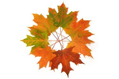 composition: Autumn Leaf Composition