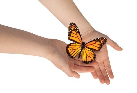 monarch butterfly: Butterfly on woman s hand