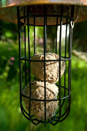 fat bird: Close up capturing a metal and wire wild bird feeder containing fat balls bird food and situated within a green outdoor area.