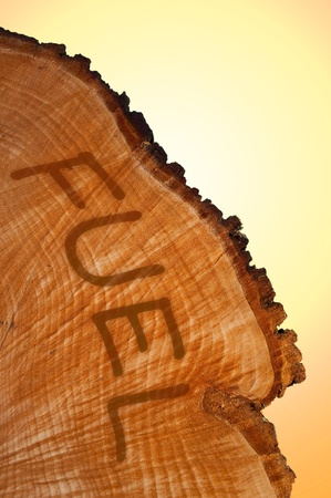 environmentalism: Cross section of tree trunk with word