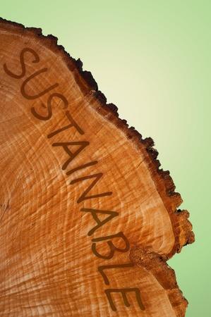sustentabilidad: Sección transversal del tronco de un árbol con word  Foto de archivo