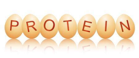 белки: Иллюстрация, изображающая ряд куриных яиц с буквы правописание слова БЕЛОК расположены на белый и отражающие на переднем плане