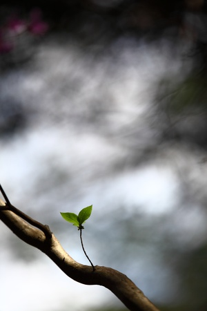 blessedness: Two Lonely Leafs on a Tree
