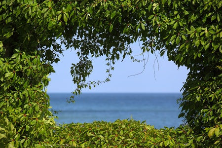 philosophical: View to the sea covered by a hedge around