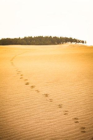 timeless: Hoof print trail at the golden sand of a desert toward a forest