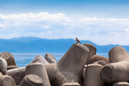 bird watcher: Raptor bird sitting like a watcher at a heap of cement made breakwaters Stock Photo