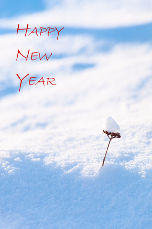 textual: Small part of a plant with huge load of fresh snow and textual wish Happy New Year